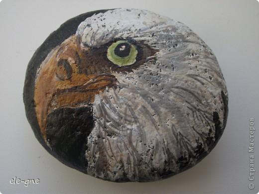 орел на камне
