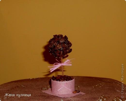 Мое пополнение в полку кофейных деревьев))) фото 3