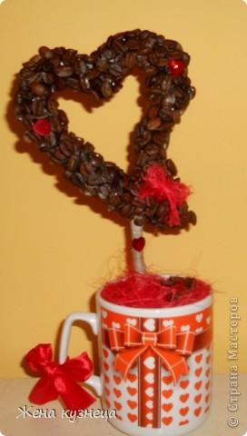 Мое пополнение в полку кофейных деревьев))) фото 5