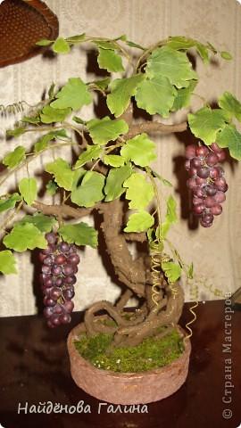 Бонсай топиарий Лепка Виноград Бонсай+МК по кисти винограда в комментариях Гипс Крупа Фарфор холодный фото 1.