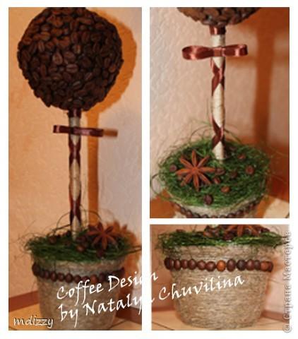 Кофейное деревце-1