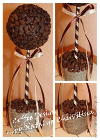 Кофейное деревце-2