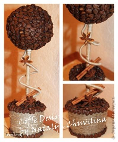 Кофейное деревце-3