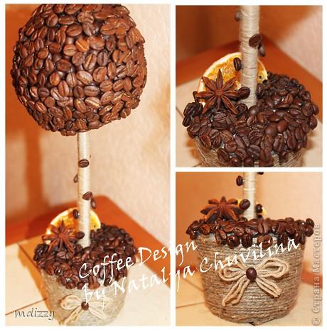 Кофейное деревце-4