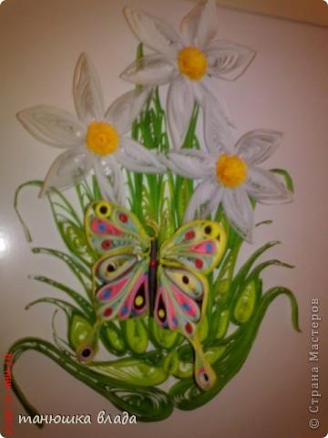 Бабочка в нарциссах фото 1
