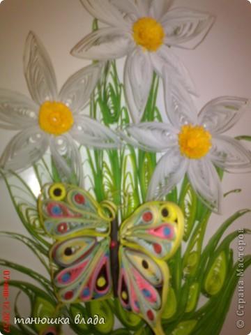 Бабочка в нарциссах фото 2