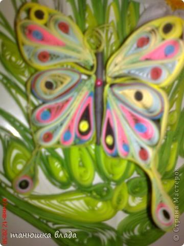Бабочка в нарциссах фото 3