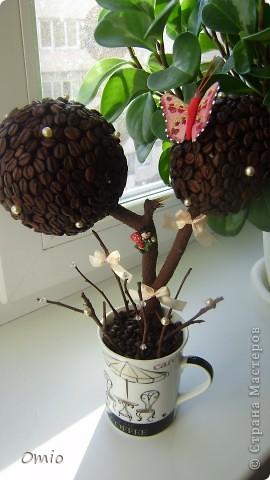 Вот свеженькая кофейная плантация. Правда здесь не достает одного дерева, но к сожалению оно уже уехало по адресу, поэтому последняя сессия без него... фото 2