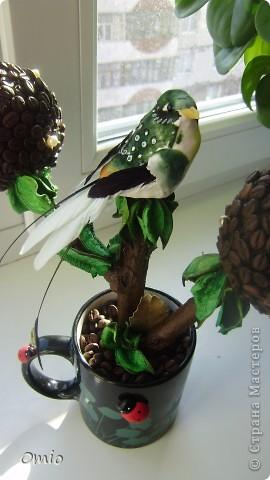 Вот свеженькая кофейная плантация. Правда здесь не достает одного дерева, но к сожалению оно уже уехало по адресу, поэтому последняя сессия без него... фото 6