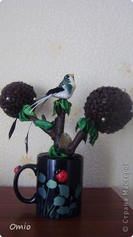 Вот свеженькая кофейная плантация. Правда здесь не достает одного дерева, но к сожалению оно уже уехало по адресу, поэтому последняя сессия без него... фото 5