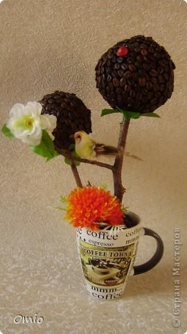 Вот свеженькая кофейная плантация. Правда здесь не достает одного дерева, но к сожалению оно уже уехало по адресу, поэтому последняя сессия без него... фото 8