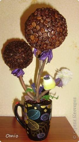 Вот свеженькая кофейная плантация. Правда здесь не достает одного дерева, но к сожалению оно уже уехало по адресу, поэтому последняя сессия без него... фото 12