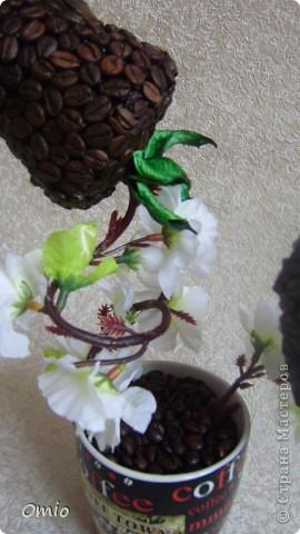 Вот свеженькая кофейная плантация. Правда здесь не достает одного дерева, но к сожалению оно уже уехало по адресу, поэтому последняя сессия без него... фото 17