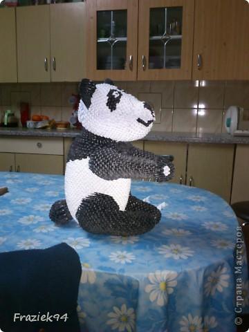 Panda фото 2