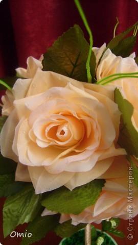 Добрый день Страна! накупила цветов, теперь не могу остановиться.... Кремово-персиковые розы - не смогла удержаться!!! следующими пойдут мои любимые лилии... фото 4