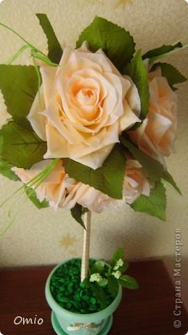 Добрый день Страна! накупила цветов, теперь не могу остановиться.... Кремово-персиковые розы - не смогла удержаться!!! следующими пойдут мои любимые лилии... фото 5