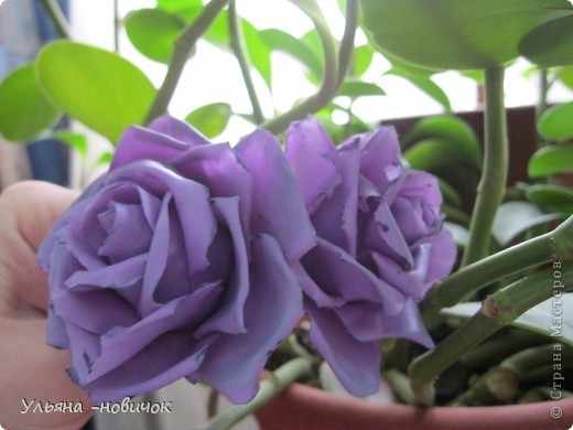 опять розы, на этот раз сиреневые фото 3