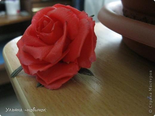 опять розы, на этот раз сиреневые фото 5