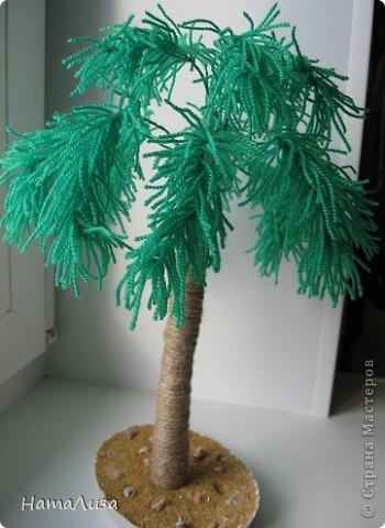 Наша пальмочка. фото 2