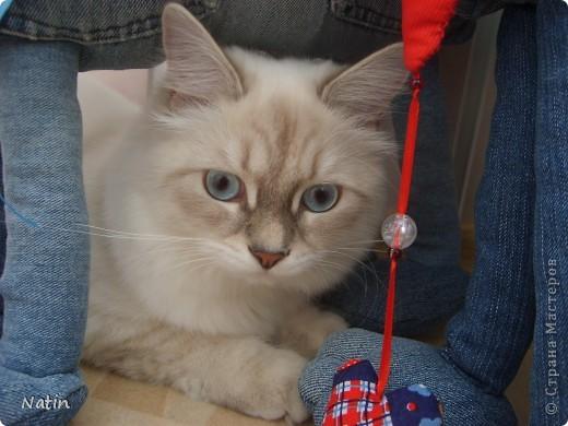 Сегодня - Международный день КОШЕК! Поздравляю всех кошатников и их питомцев!  И предлагаю Вам фоторепортаж о нашей красавице Алисе. И не только... фото 5