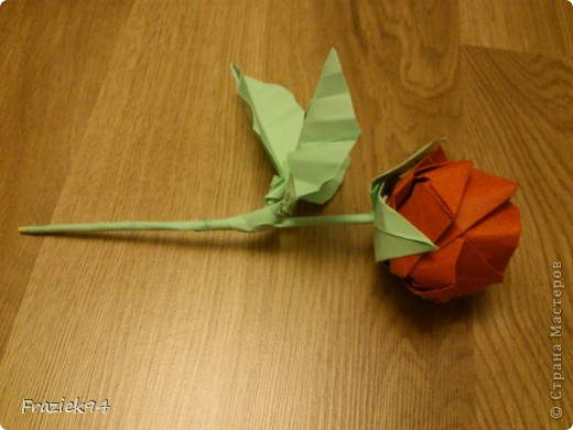 Róże фото 3