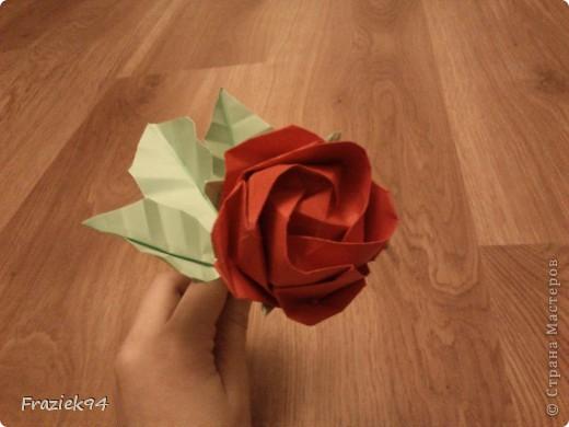 Róże фото 4