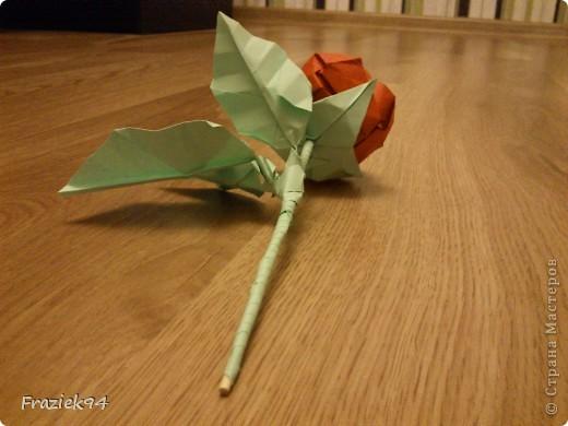Róże фото 5