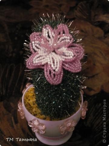 Кактусы – это потрясающие растения и некоторые кактусы можно вырастить при нашем климате, ведь приспособленность таких интересных растений как кактусы достойна уважения! фото 3