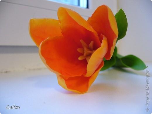 Вот та роза, в которую влюбился бедный тюльпан..... фото 5