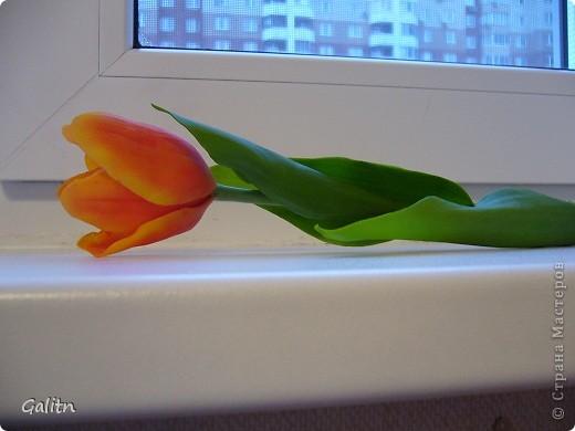 Вот та роза, в которую влюбился бедный тюльпан..... фото 6