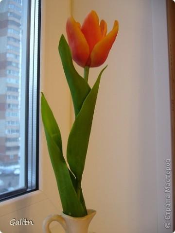Вот та роза, в которую влюбился бедный тюльпан..... фото 4
