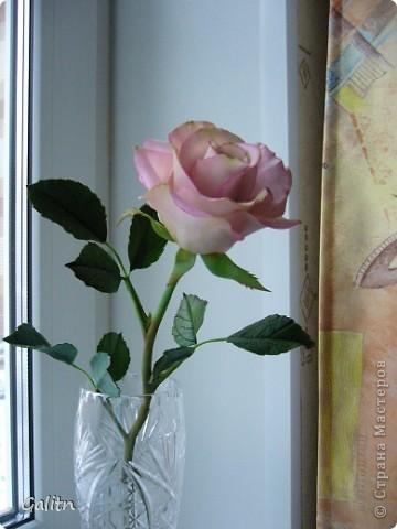 Вот та роза, в которую влюбился бедный тюльпан..... фото 1