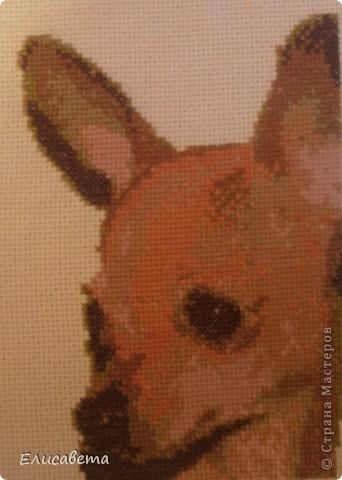 Вот такую картинку подарила Тете в память о ее любимце... фото 2