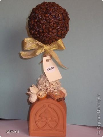 Давно мечтала сделать кофейное деревце. фото 1