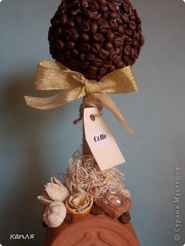 Давно мечтала сделать кофейное деревце. фото 4