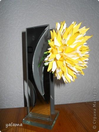 желтая красавица фото 3
