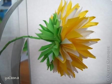 желтая красавица фото 4