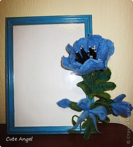 Очередная рамка под фото.Альпийский мак,очень люблю синие цветы =) фото 1