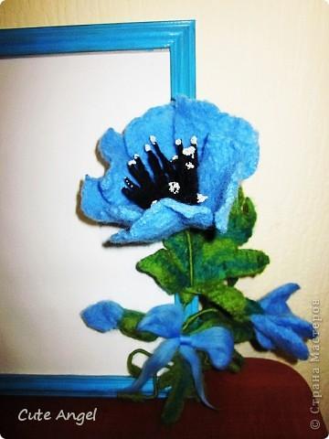Очередная рамка под фото.Альпийский мак,очень люблю синие цветы =) фото 2