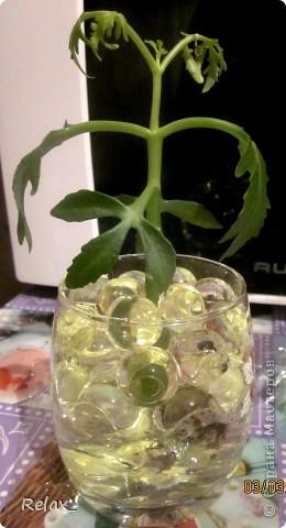 плохо видно шарики но как могла фотографировала...экспериментирую..сможет ли расти в гидрогеле растение пока не приобрела красивую вазу в стакан насыпала фото 1