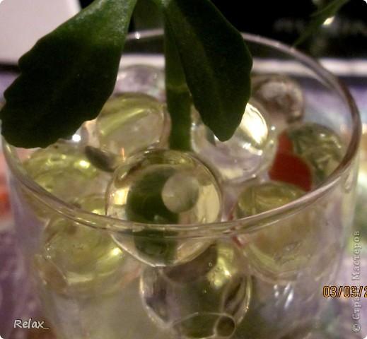 плохо видно шарики но как могла фотографировала...экспериментирую..сможет ли расти в гидрогеле растение пока не приобрела красивую вазу в стакан насыпала фото 3
