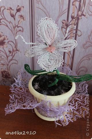 Моя дикая орхидея из бисера. фото 1