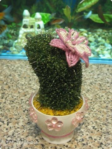 Цветущий кактус МК Бисер