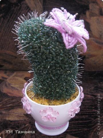 Кактусы – это потрясающие растения и некоторые кактусы  можно вырастить при нашем климате, ведь приспособленность таких интересных растений как кактусы достойна уважения! фото 1