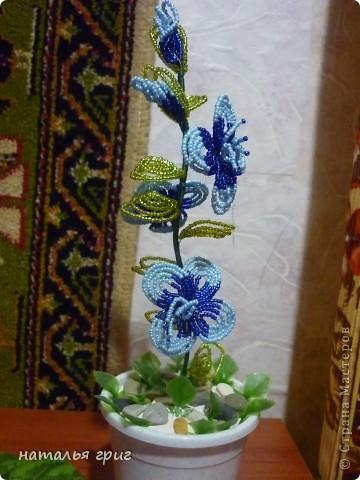 моя оранжерея. фото 2