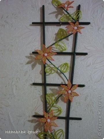 моя оранжерея. фото 3
