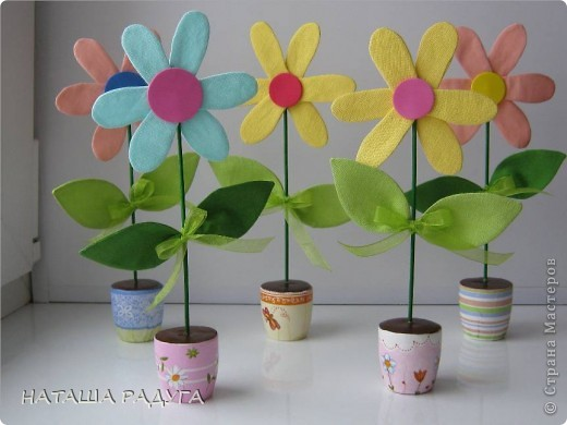Вот такие разноцветные ромашки в горшочках выросли вслед за тюльпанами. фото 1