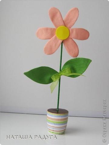 Вот такие разноцветные ромашки в горшочках выросли вслед за тюльпанами. фото 2
