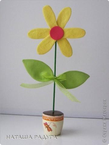 Вот такие разноцветные ромашки в горшочках выросли вслед за тюльпанами. фото 3