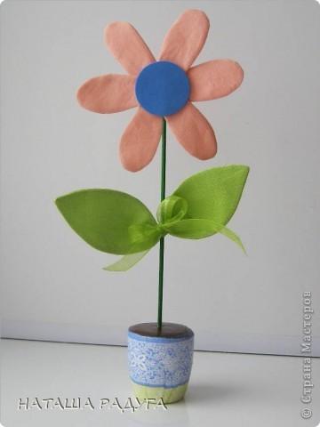 Вот такие разноцветные ромашки в горшочках выросли вслед за тюльпанами. фото 4